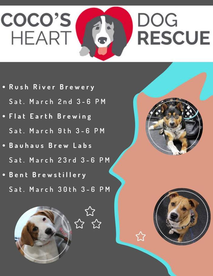 Doggy Road Trip Adoption Event Series Stop 3 - From Bauhaus Brew Labs